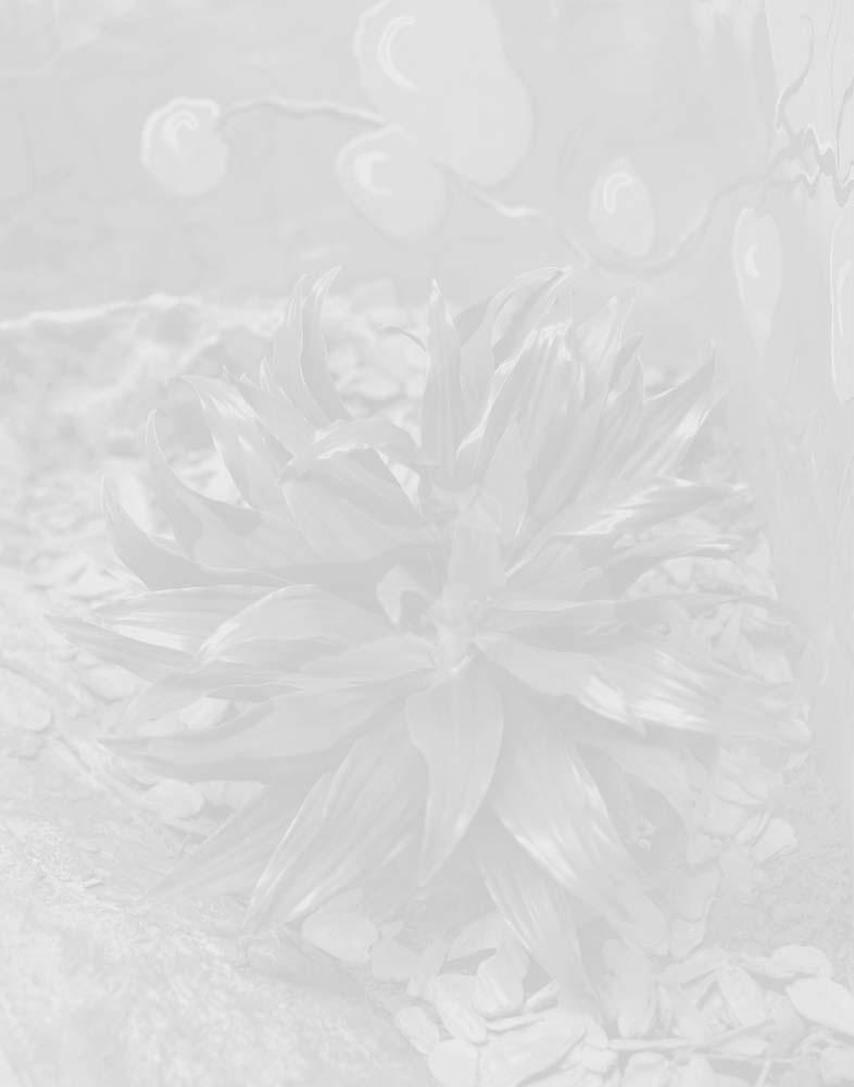 planta cinza